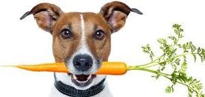 Plantbased Pets
